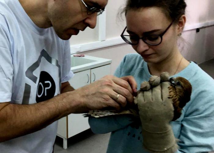 Аддитивный протез для дикой птицы